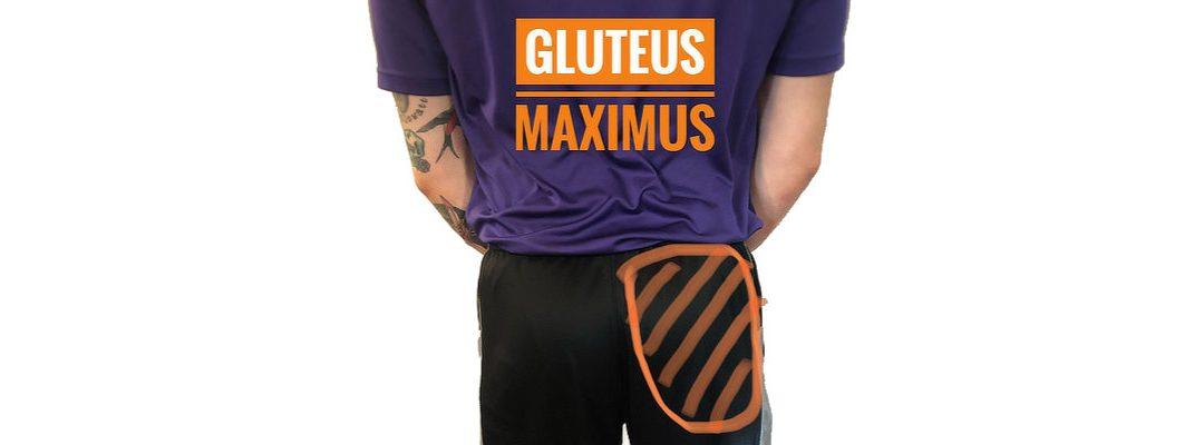 THE BUTT BASICS: GLUTEUS MAXIMUS